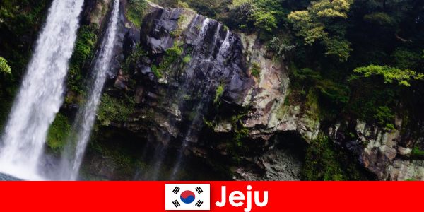 Güney Kore'de Jeju, yabancılar için nefes kesici ormanlara sahip subtropikal volkanik ada